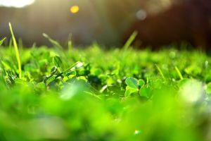 Wrocławskie trawniki stają się piękne dzięki naszym usługom ogrodniczym. Zielona, soczysta trawa z rolki lub siewu ucieszy każdego właściciela ogrodu przydomowego
