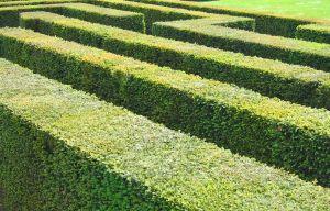 Usługa ogrodnicza zakładania ogrodów i terenów zielonych to nie tylko sztuka, ale i trudne rzemiosło.Wrocław