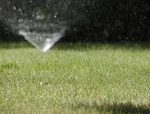 Zraszacz nawadniający trawnik
