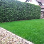 Bujny trawnik bez przesuszeń