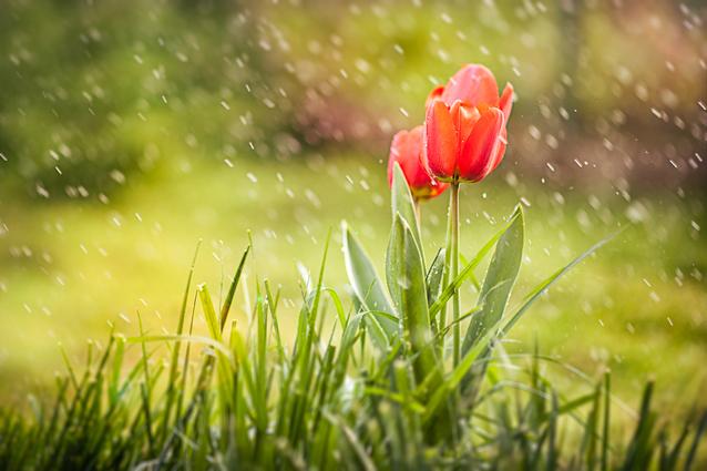 Deszcz a system nawadniania
